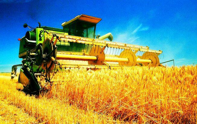 藏粮于地、藏粮于技—今年粮食丰收基础稳固