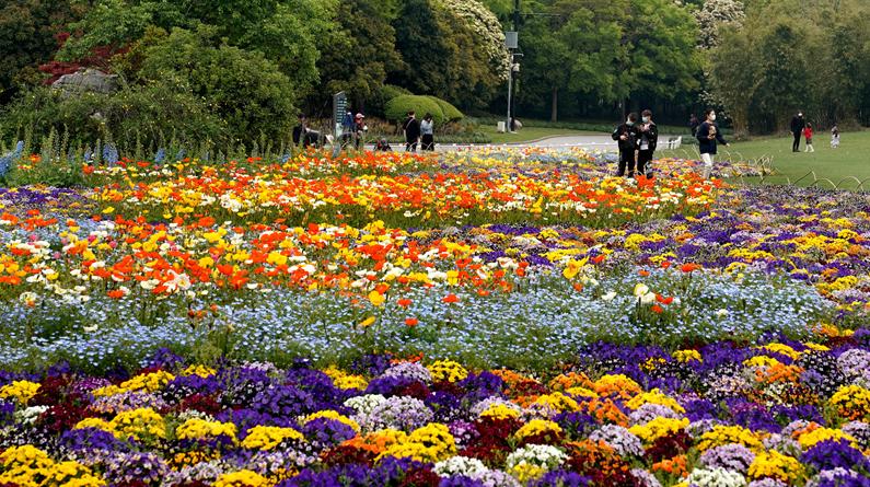 """上海浦东:世纪公园的""""彩色季"""""""