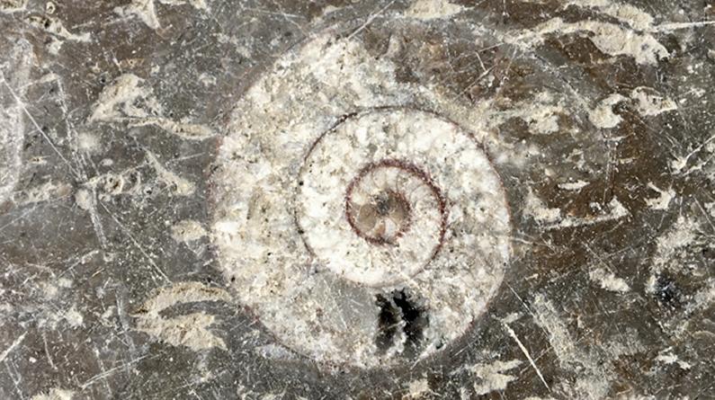 """张家界:几亿年前的""""化石地板""""记录沧海桑田"""