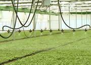 【微视频】这里的蔬菜年销售上亿元,凭啥?