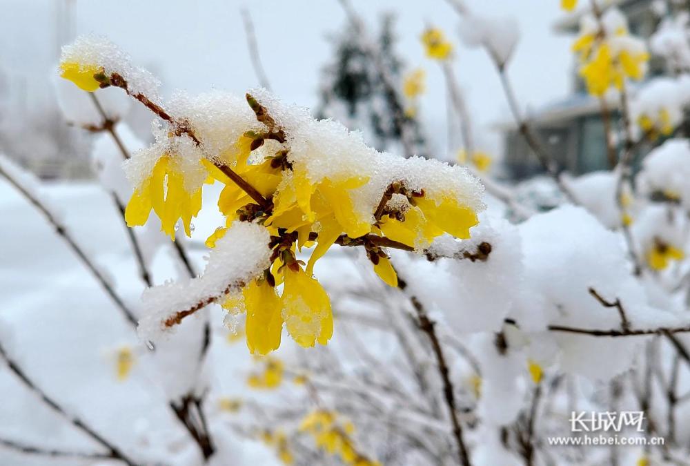 只缘春欲尽,留著伴梨花——承德围场暮春再迎降雪