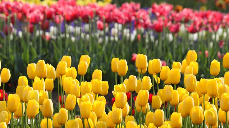 高清组图|牡丹花开满目春