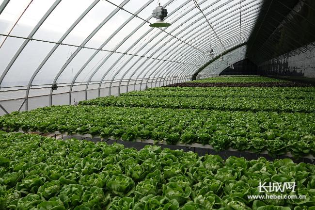 【记者走基层】承德隆化:全景农业踏出乡村振兴新路子
