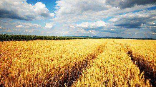 今年全国粮食产量预计达6.7亿吨