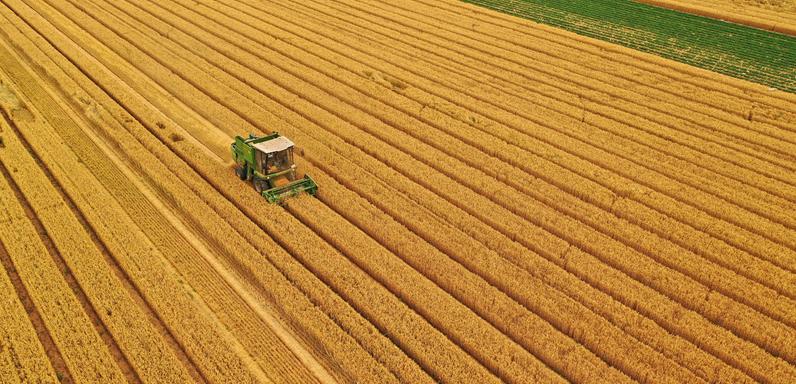 龙8娱乐网页版滦州:抢收小麦 颗粒归仓
