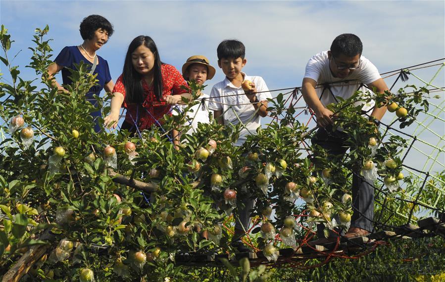 """2020年龙8娱乐网页版打造10个系列农产品""""龙8娱乐网页版品牌"""""""