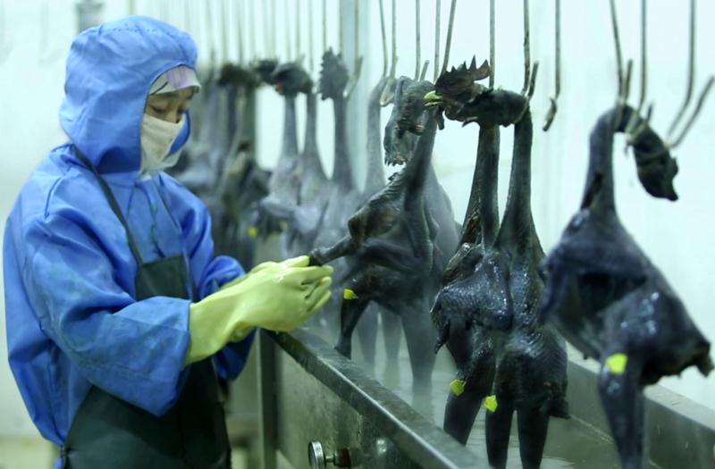 """雞肉產品線上線下大促銷 這波""""吃雞""""行情打哪來"""
