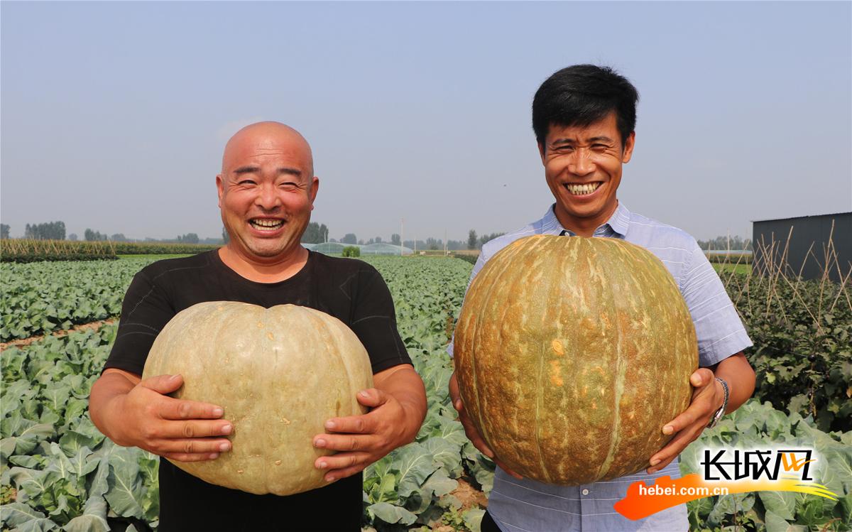 圖集|涿州:喜迎豐收季 農民笑開顏
