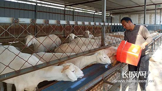 文安:优化农业产业结构 打造美丽富裕新乡村