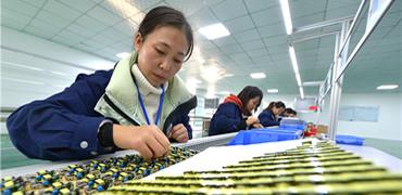河北鸡泽:发展电子信息产业稳就业促增收