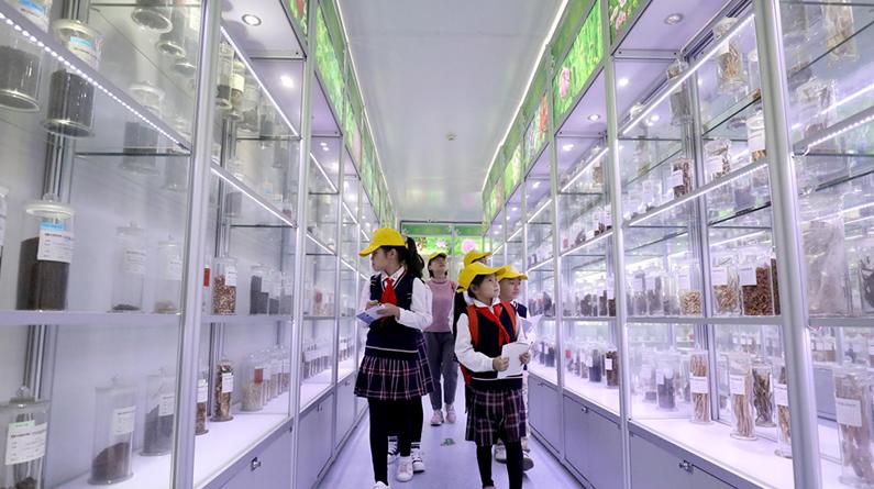 河北石家庄:学习中药知识 感受传统文化