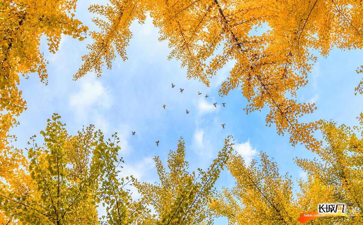 河北大學:定格校園內的繽紛秋色