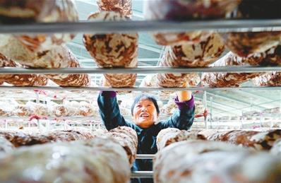 邢台市开发区采摘香菇