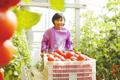南和:设施农业助农增收