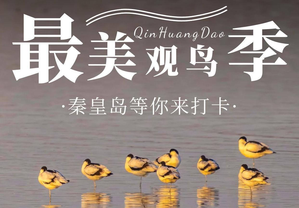 最美观鸟季 秦皇岛等你来打卡