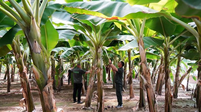 河北万全大力发展现代农业