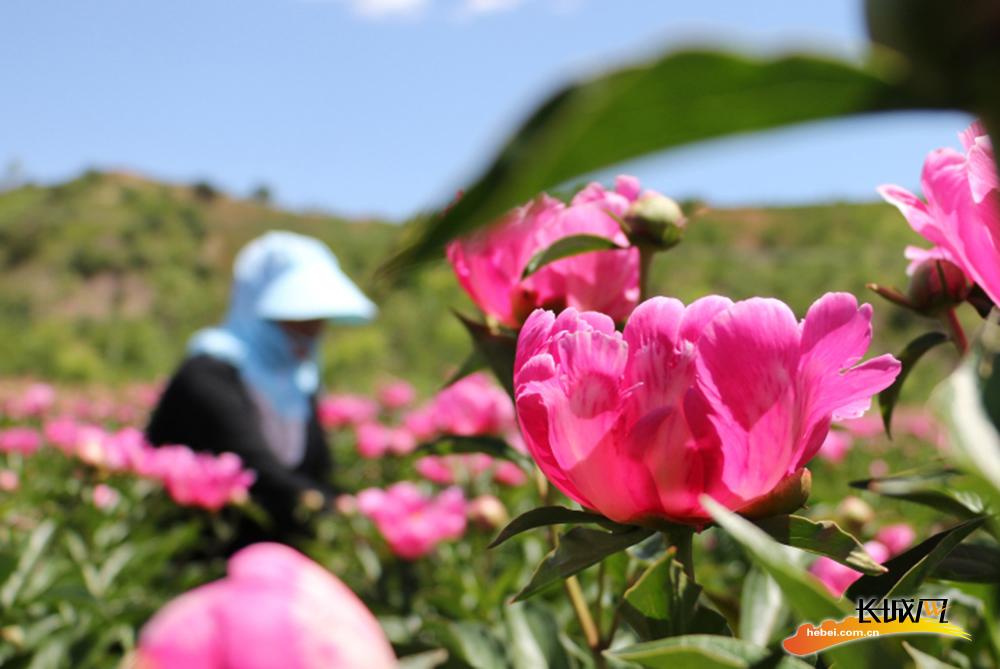 河北承德县:农旅融合 绘就乡村振兴新图景