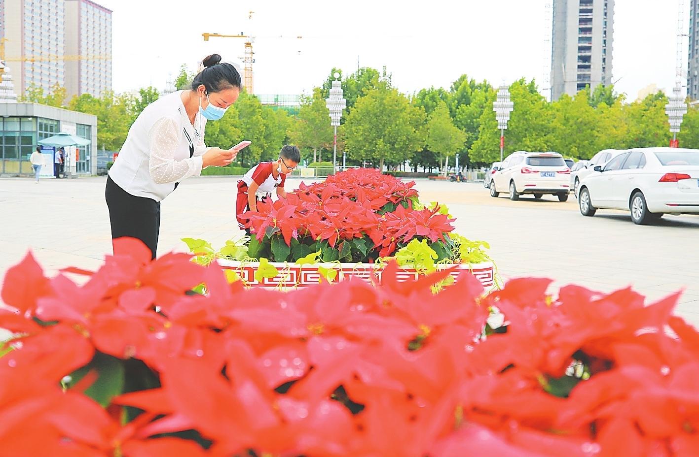 景观花箱成为市区一道靓丽的风景线