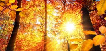 秋季保健重在養肺