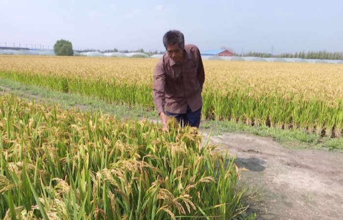 唐山丰南:稻田养蟹人的小康梦