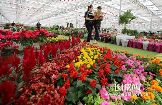廊坊大厂:国庆假期来临 花卉绿植俏销