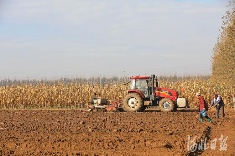 河北滦南:播种小麦