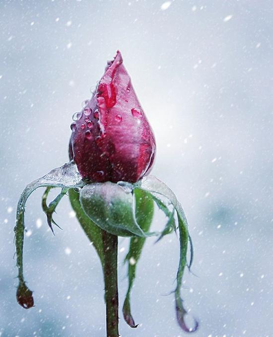 近距离感悟花与自然之美 赏心悦目的自然视觉