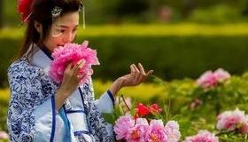 相约柏乡踏青赏花 第七届汉牡丹文化节