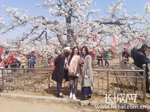 博野县梨花节开幕现场签约4个重大项目