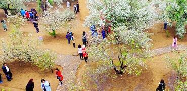 第十一届怀来海棠花节开幕